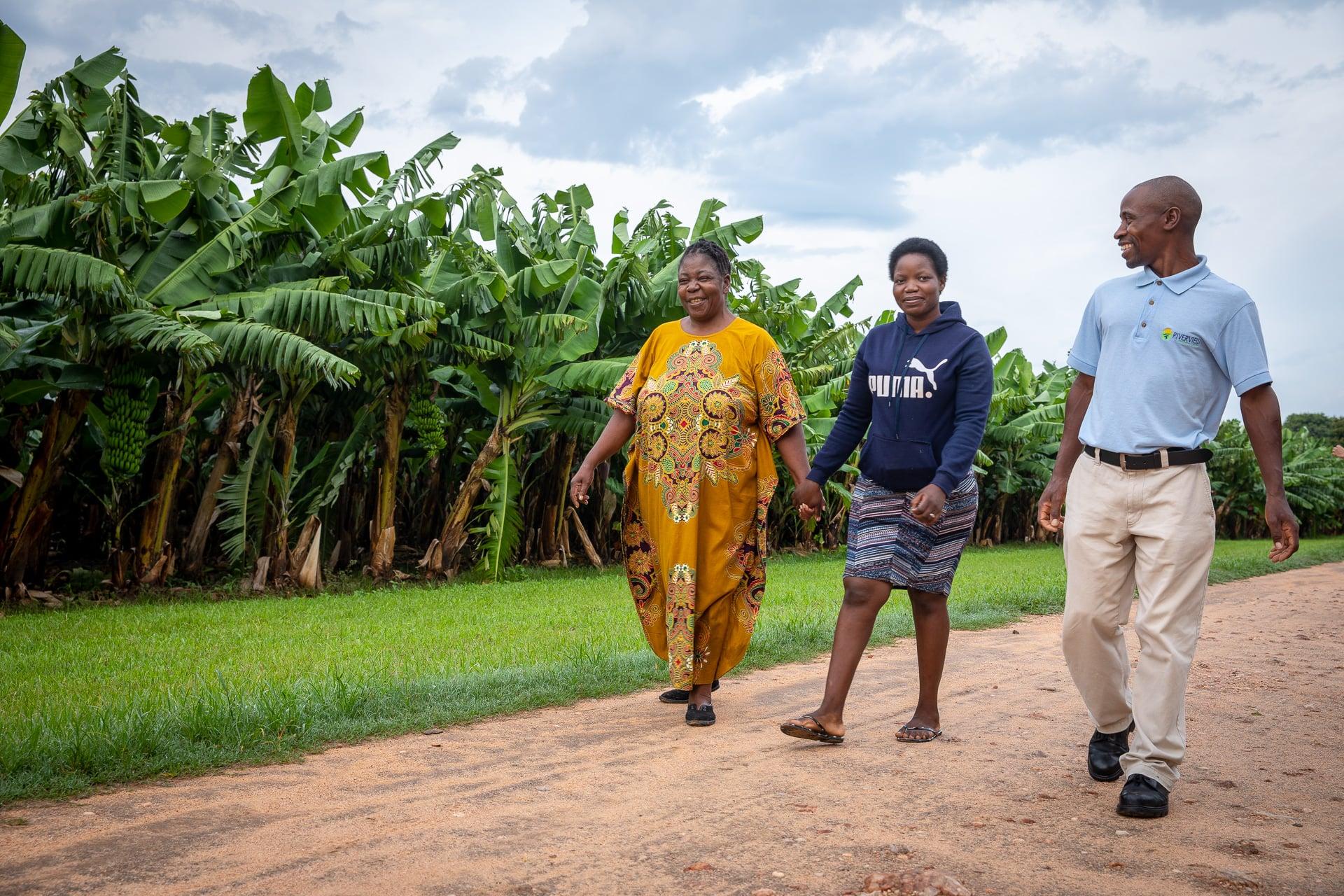 Walking in banana plantation